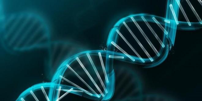 ترجمة المعلومات الوراثية